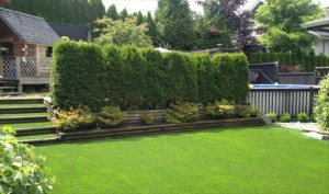 Backyard Artificial Lawn Cost in Vancouver